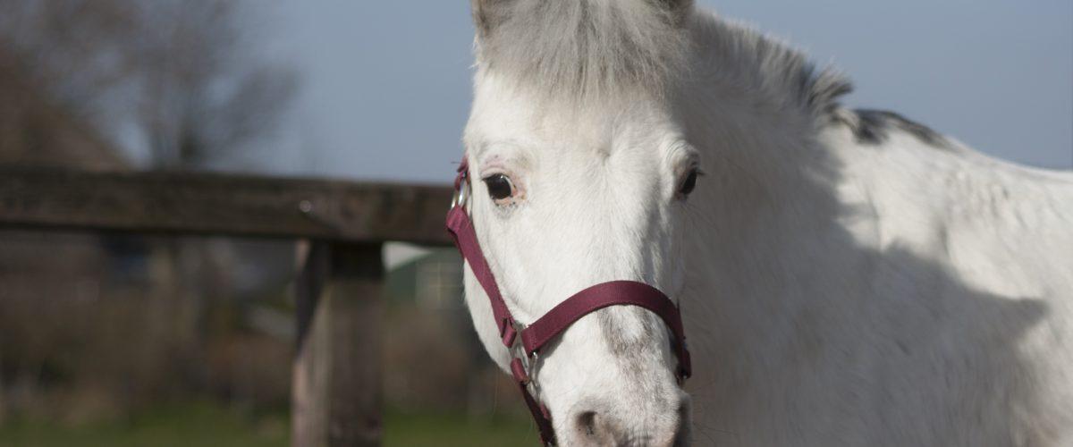 paard van het jaar
